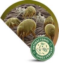 Antibakteriyel Halı Yıkama